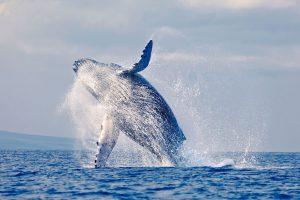 Whale Watching santa barbara