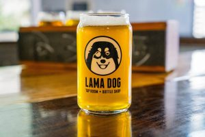 llama dog